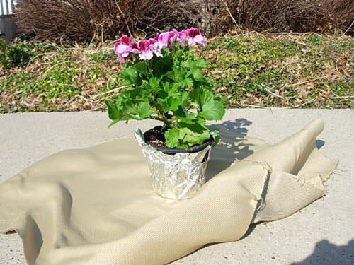 How to wrap a flower pot with fabric to give as a gift