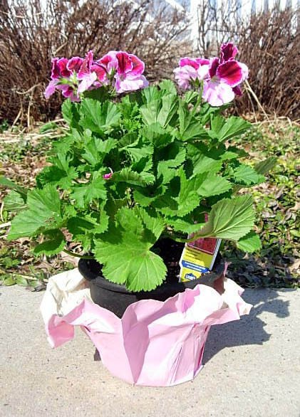 What to so with a plastic flower pot
