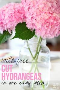 Wilt-free-cut-hydrangeas-in-one-easy-step