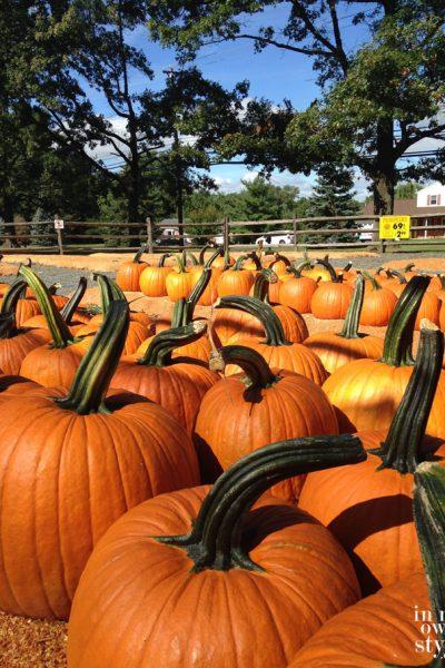 5 Creative Pumpkin Ideas