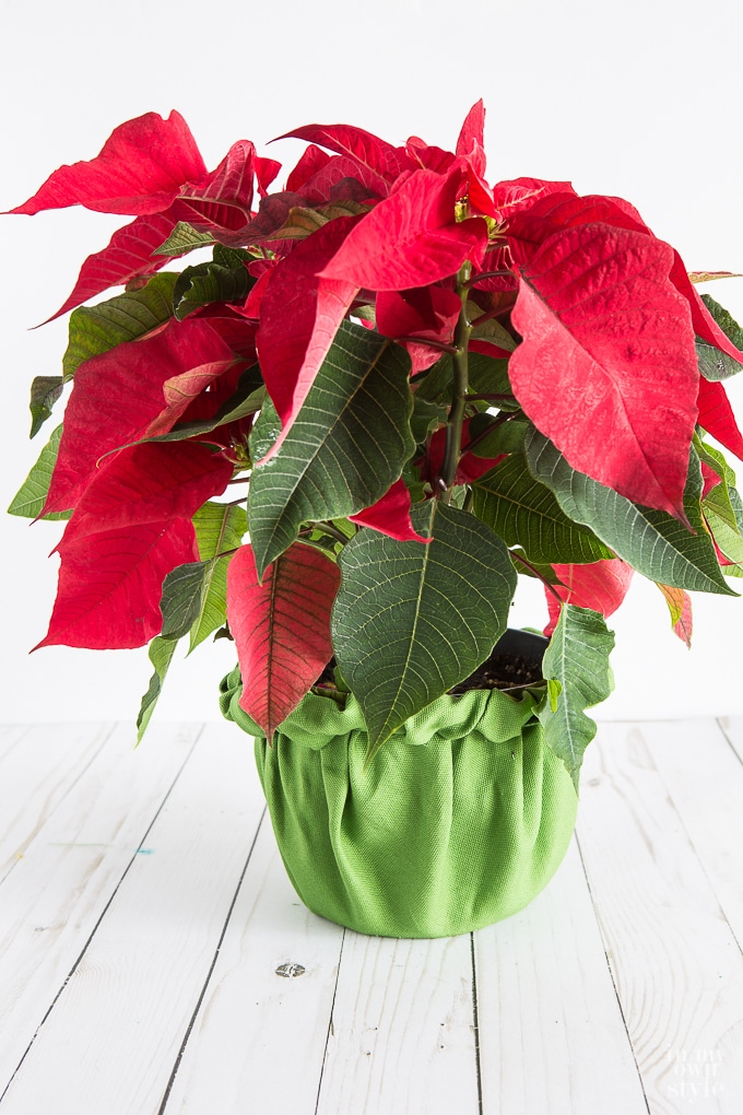 Creative Way To Wrap A Christmas Plant Or Flower Pot In